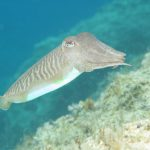 Cyprus Marine Life