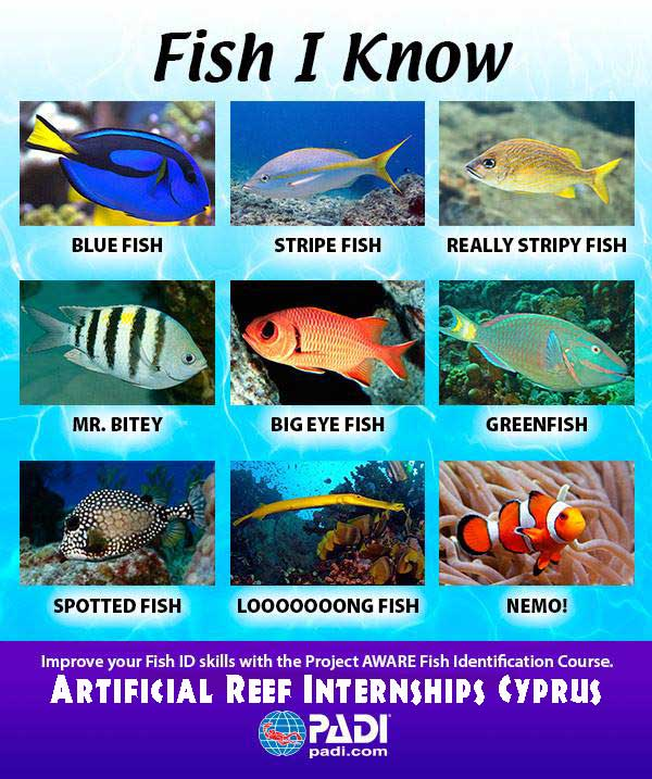 Artificial Reef Internships in Cyprus